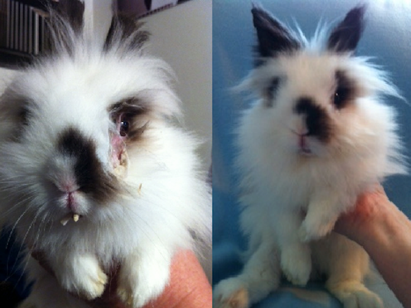 Rudy the rabbit
